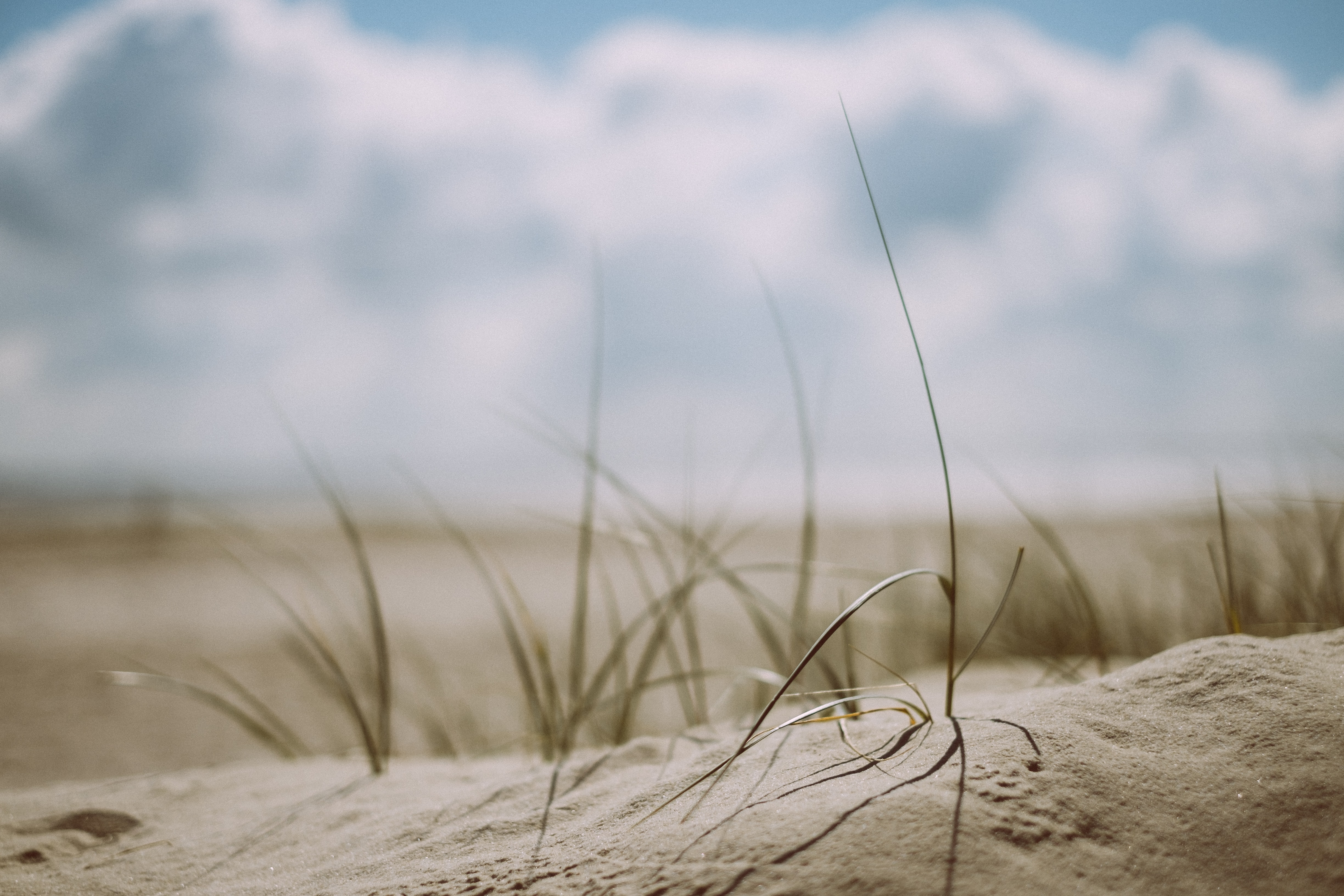 Grass on a sand dune beach in Langeoog