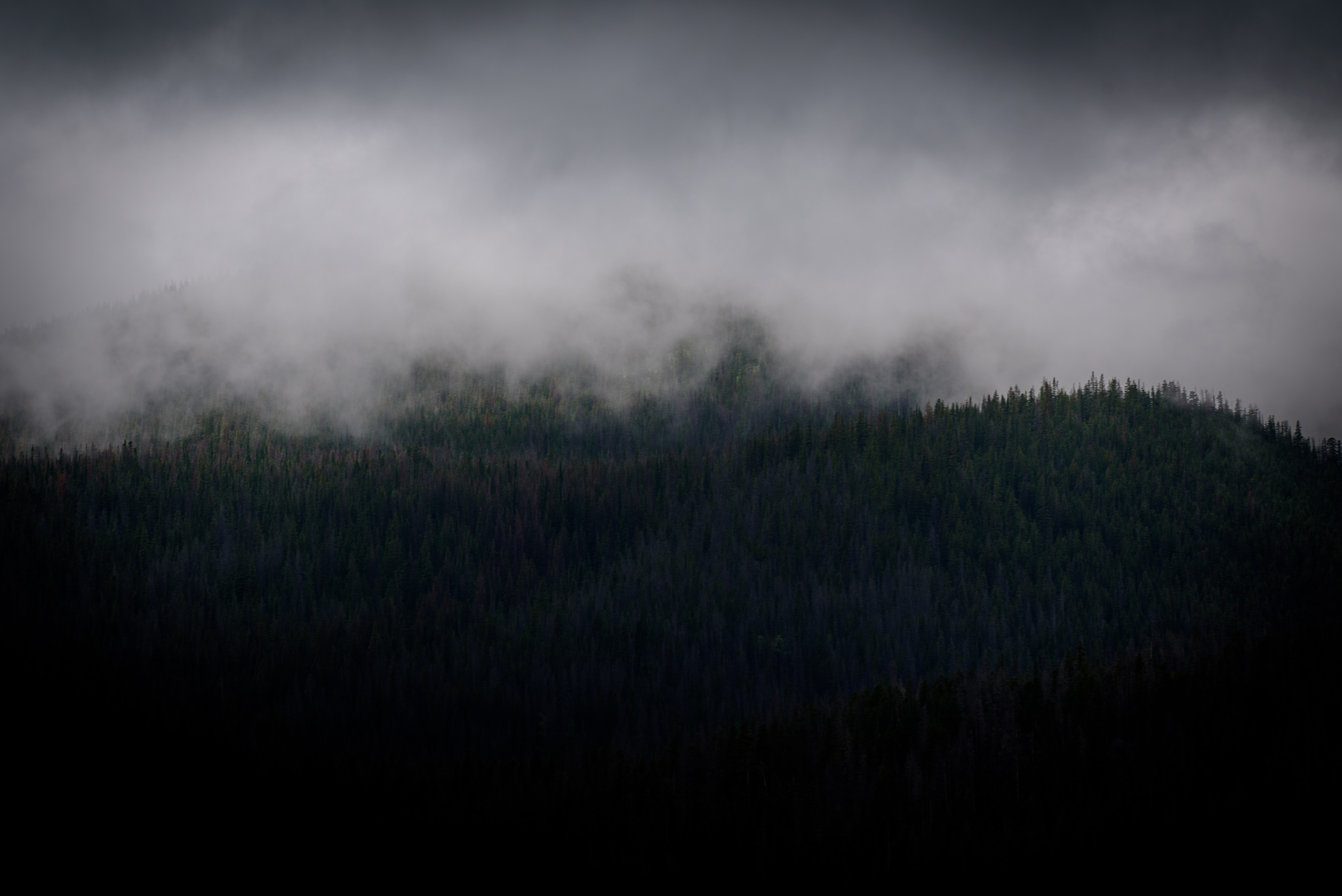 A haze over an evergreen forest in Colorado