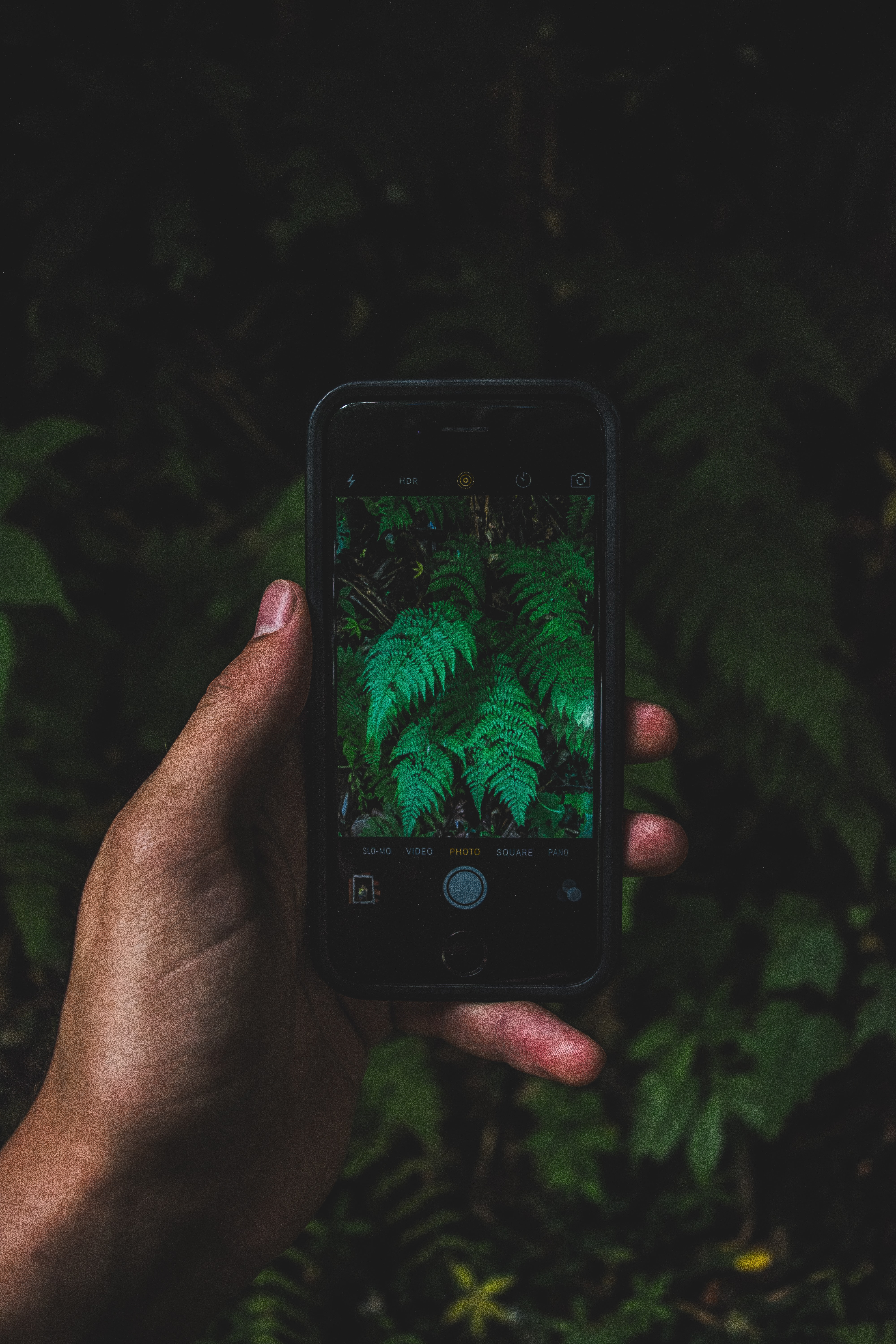 A person taking a photograph of fern leaves with a smartphone