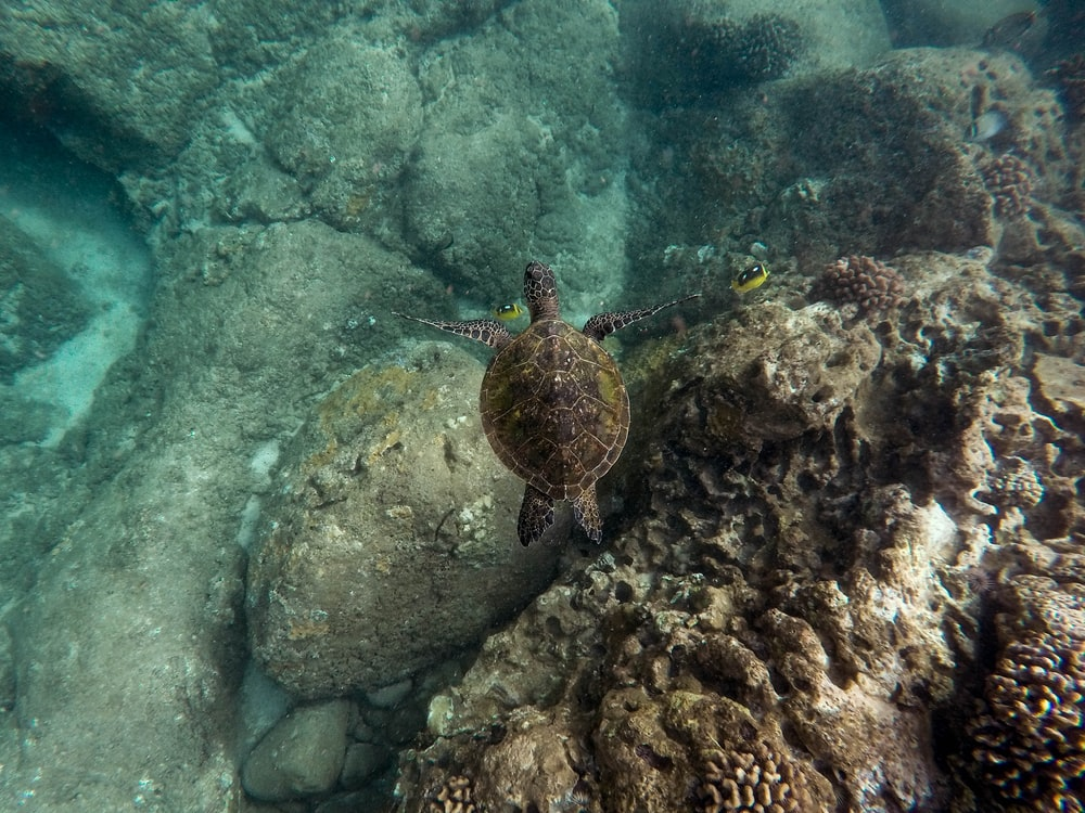 photography of brown turtle