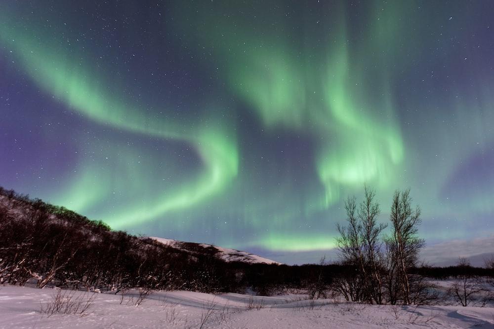 photo of green aurora borealis