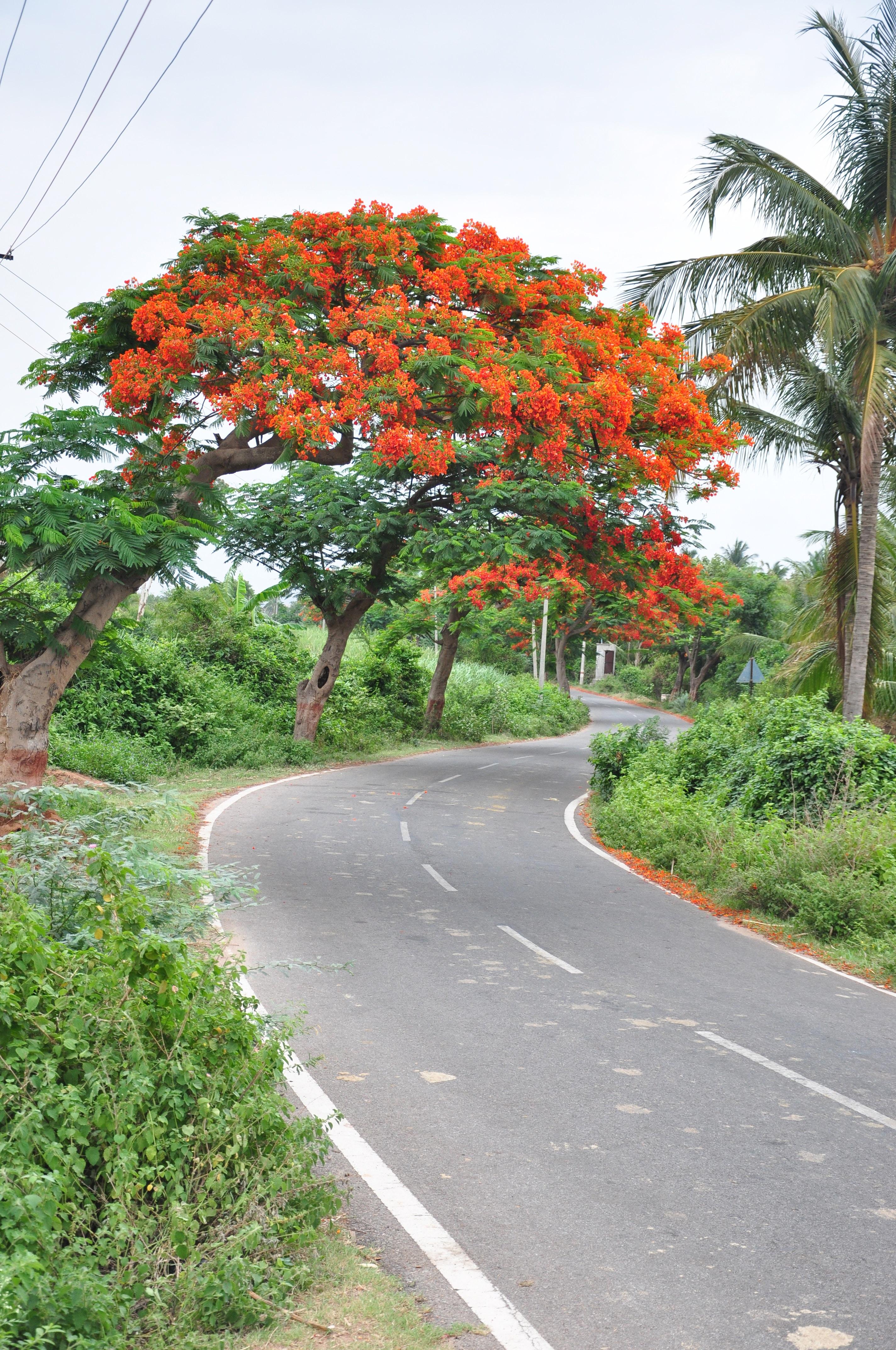 Free Unsplash photo from Pradhan Thandra