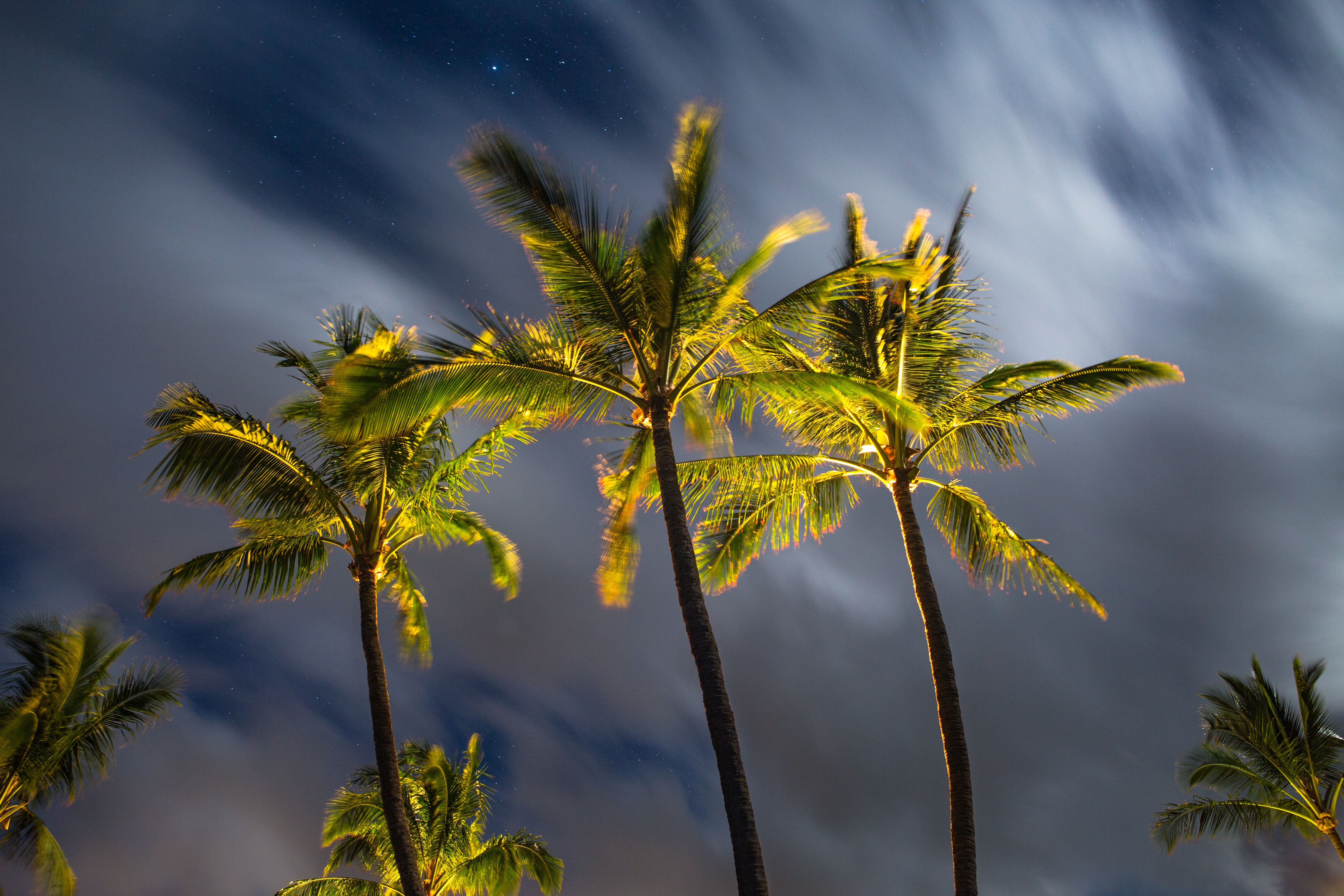 shallow focus of green palm trees