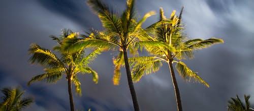 כמו עץ בזמני סערה – מסע ברוח החומר: תרומתו של העיסוק באמנות בתהליך ההתמודדות עם מחלה מסכנת חיים