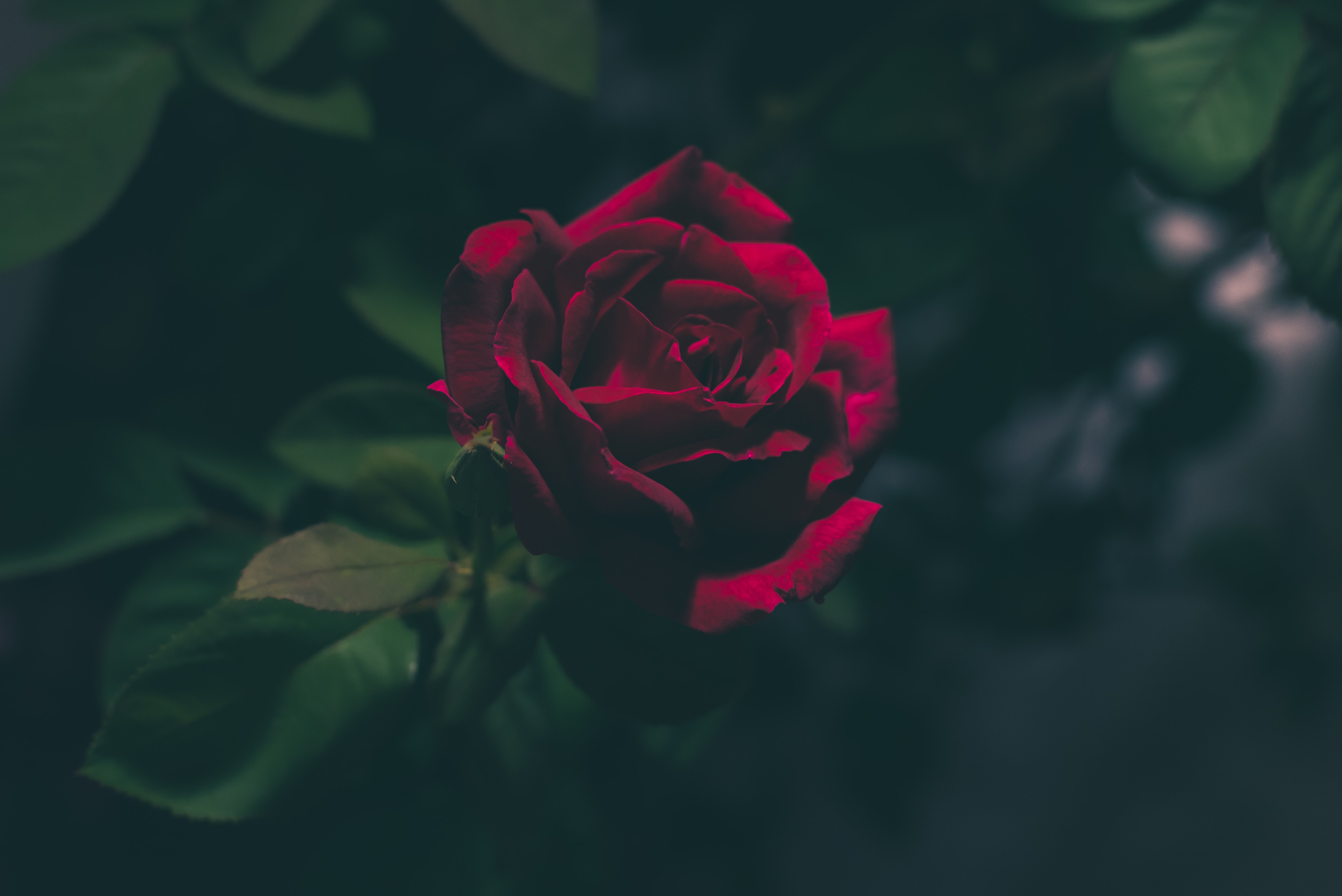 Free Unsplash photo from Jez Timms