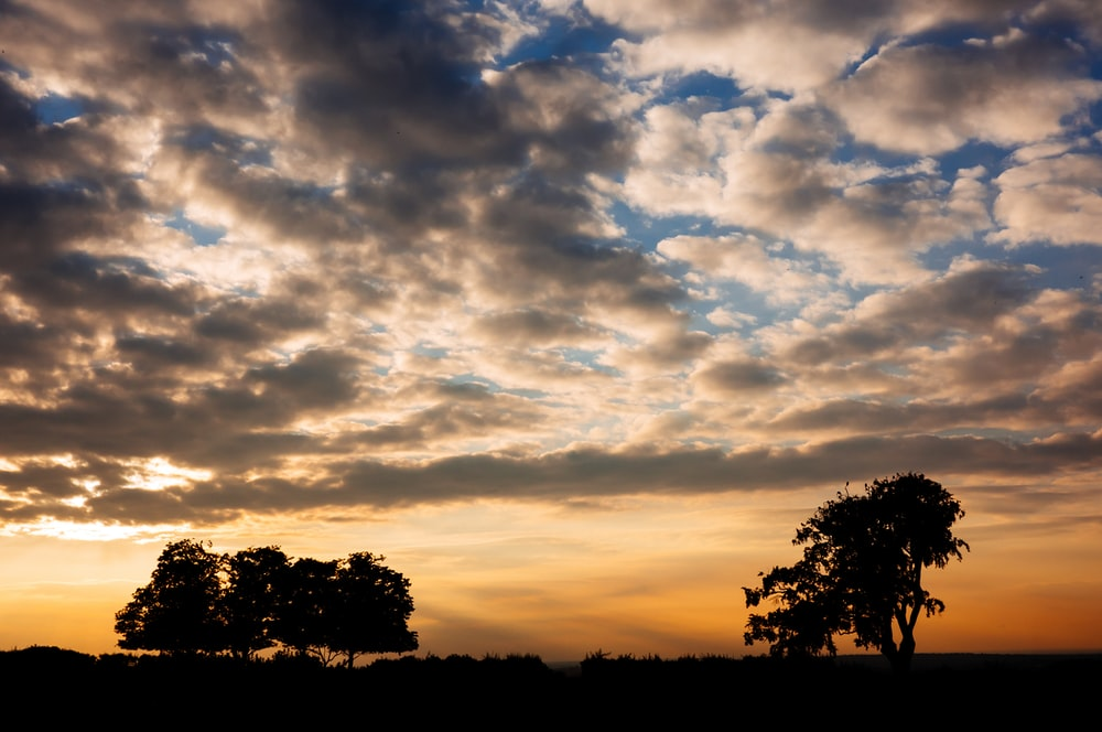silhouette of trees under orange and gray clouds during daytime