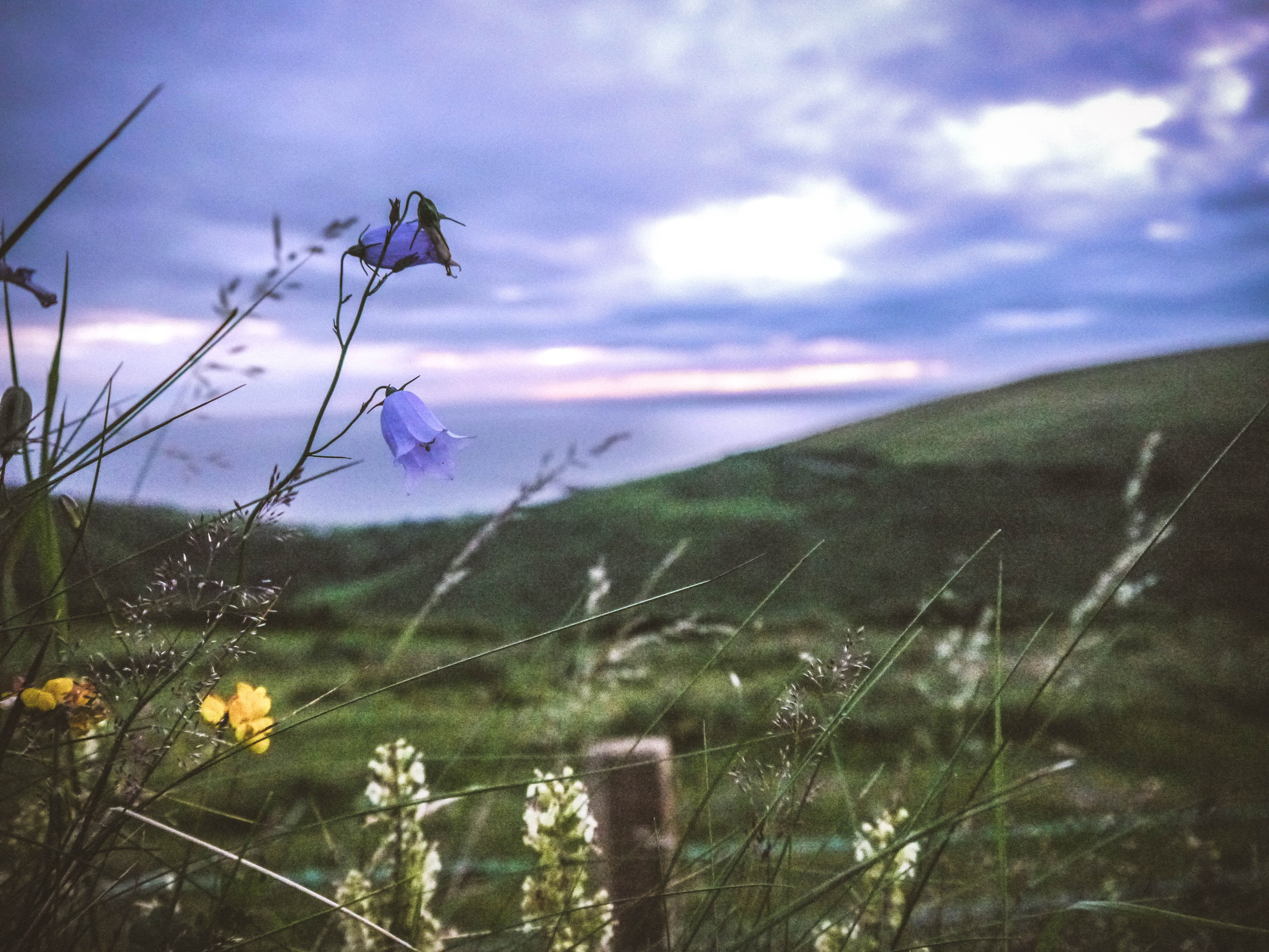 A bleak shot of blue, yellow and white flowers at the edge of a meadow