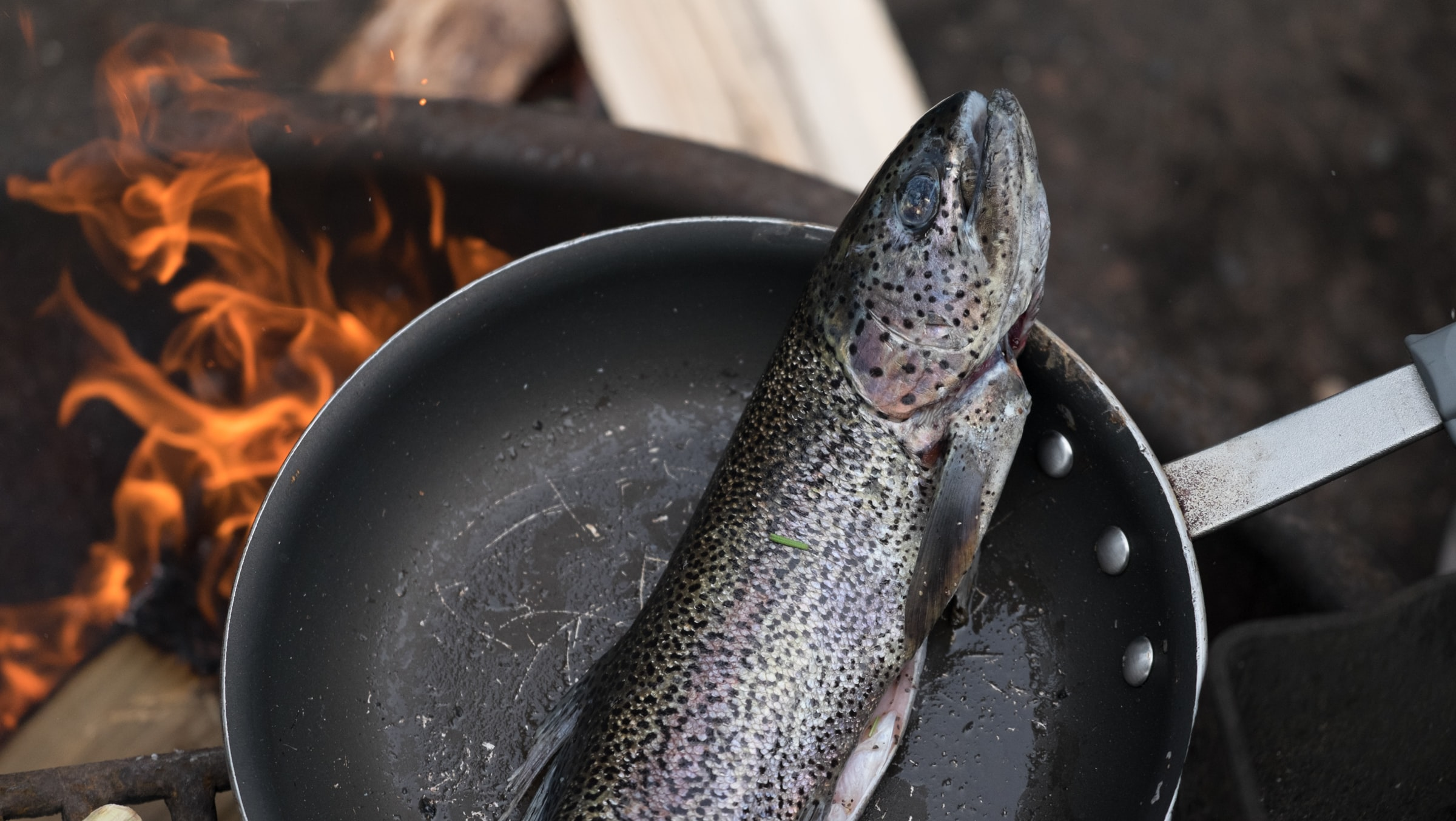 Freshly caught trout cooking in a skillet over an open flame