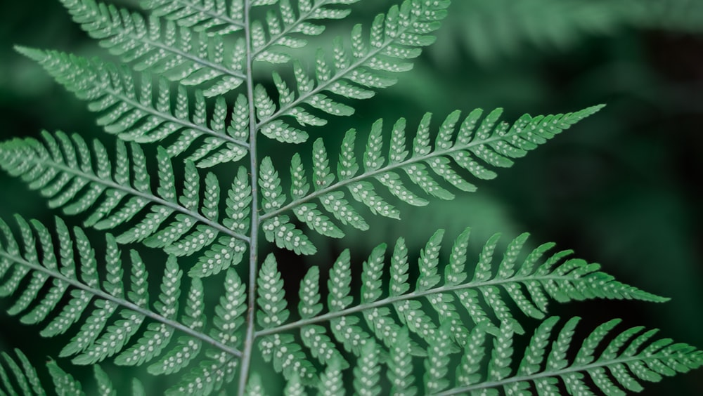 Air Purifying Plants: Numerous Benefits Of These Plants