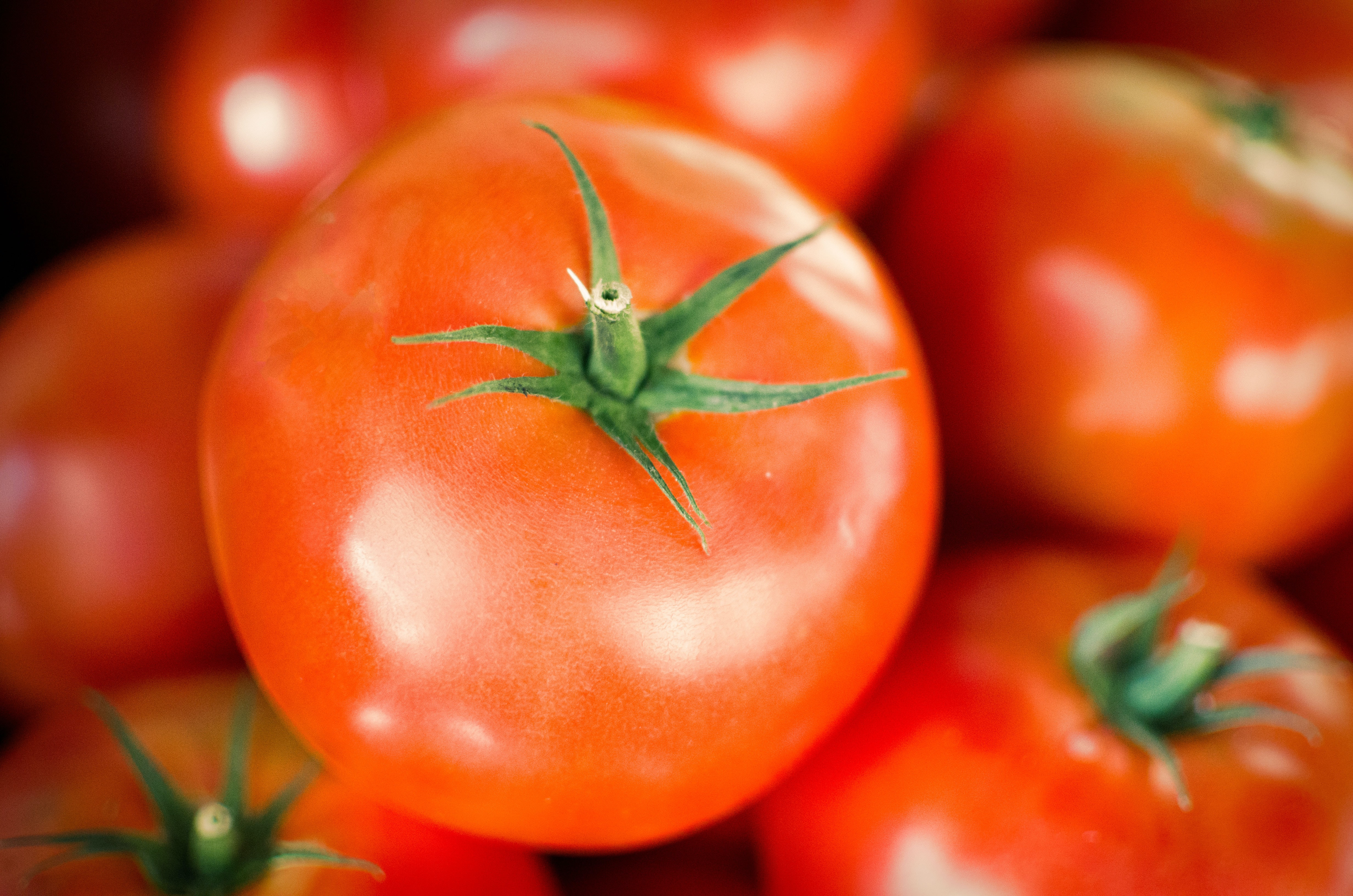 Shiny, red, fresh, ripe, red tomatoes in Plovdiv