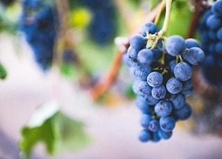selective focus photography of purple grape fruit