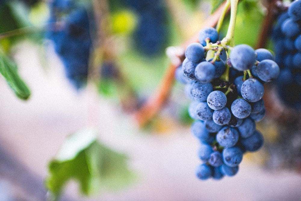 selective focus photography of purple grape fruit