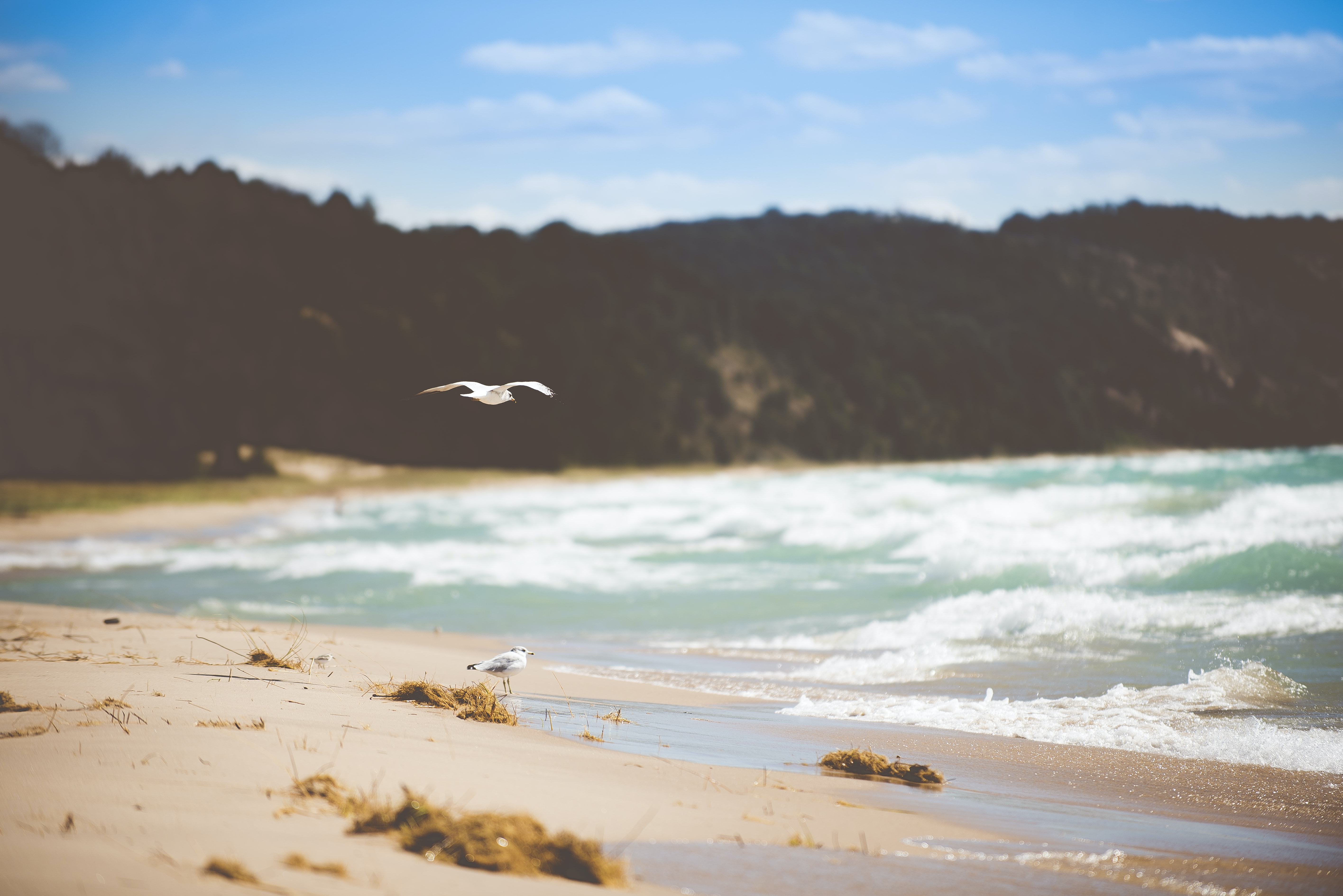 seagull flying above beach shore