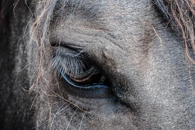 close-up photo of gray horse's eye