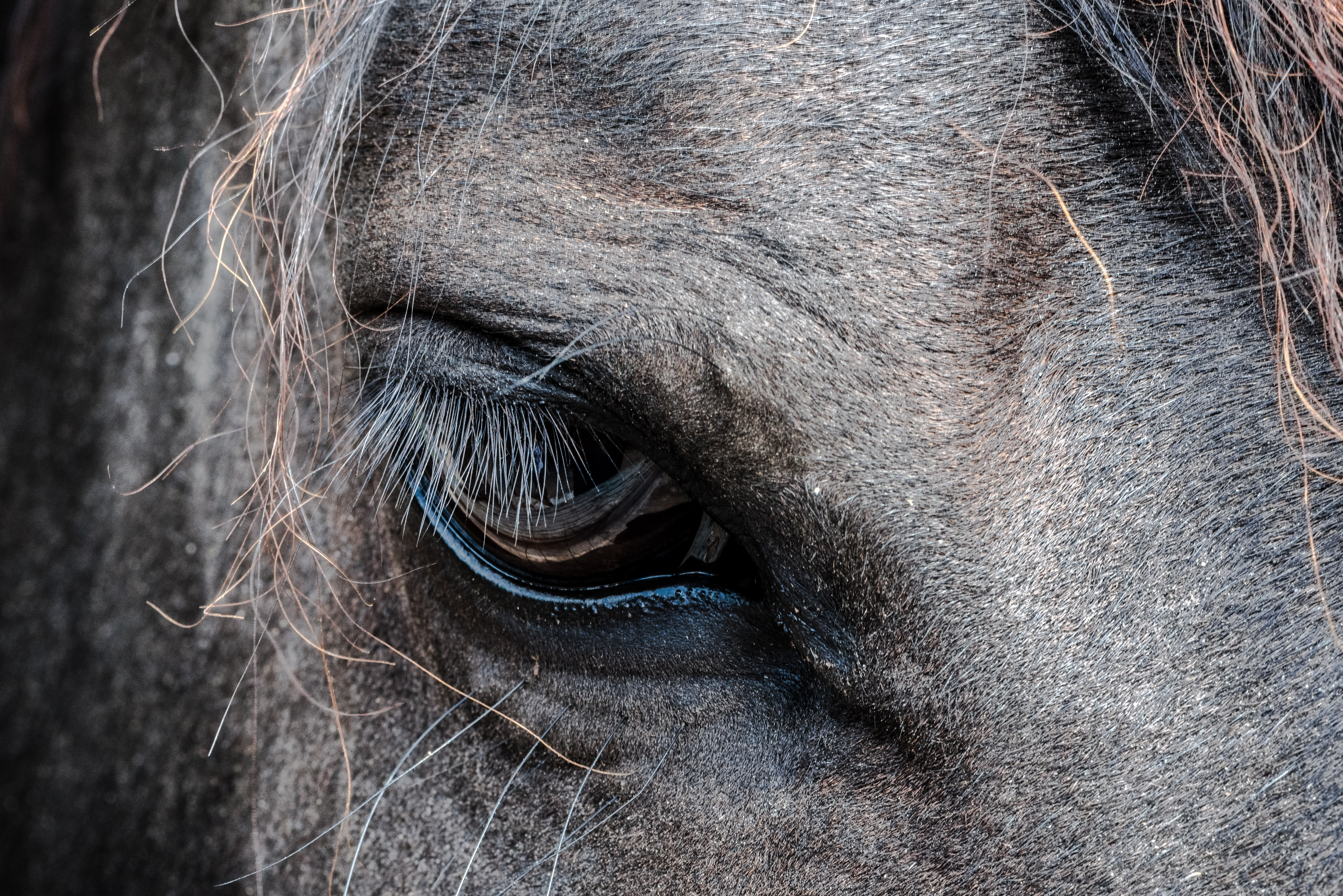 close-up photo of gray horse's eye