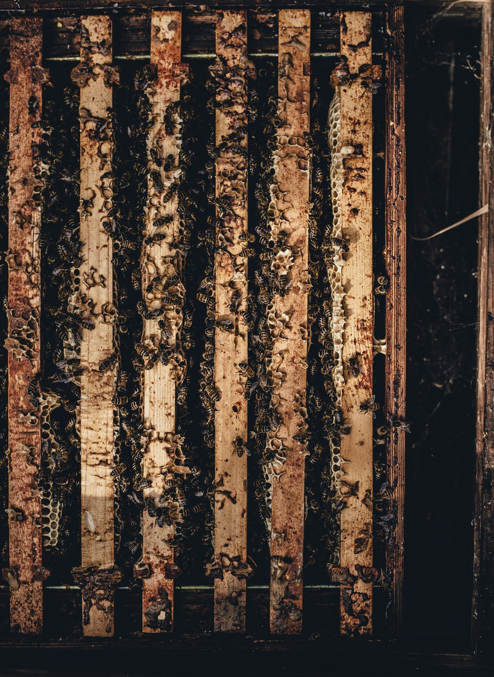 Bees inside the wooden cage