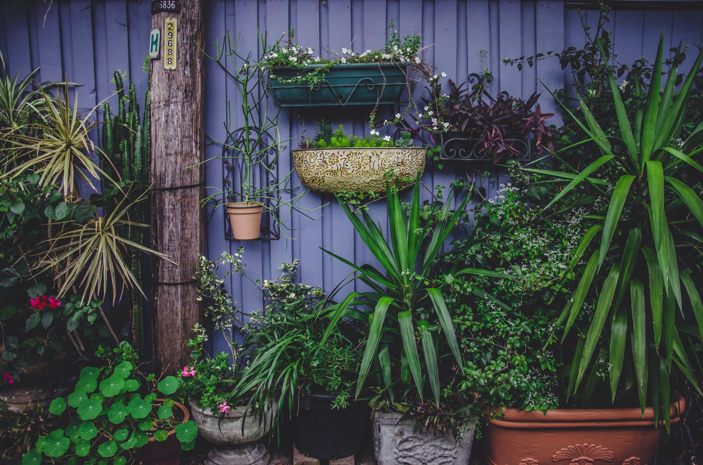 tuin-verlichting-planten