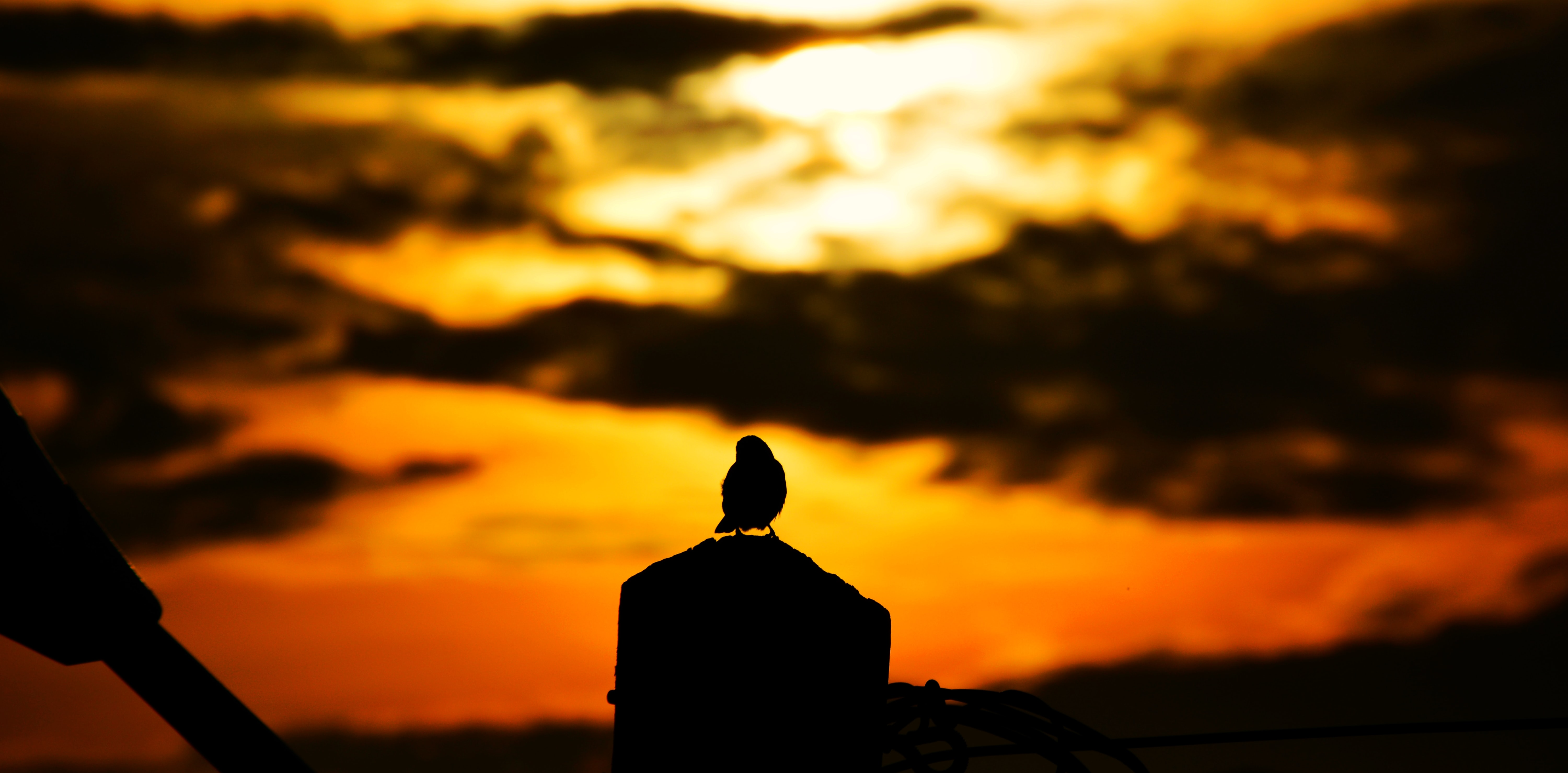 A silhouette of a bird perched on a rock or post with the sunset creating an orange sky in Bessengue