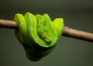 green snake on brown tree branch