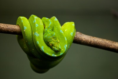 green snake on brown tree branch snake zoom background