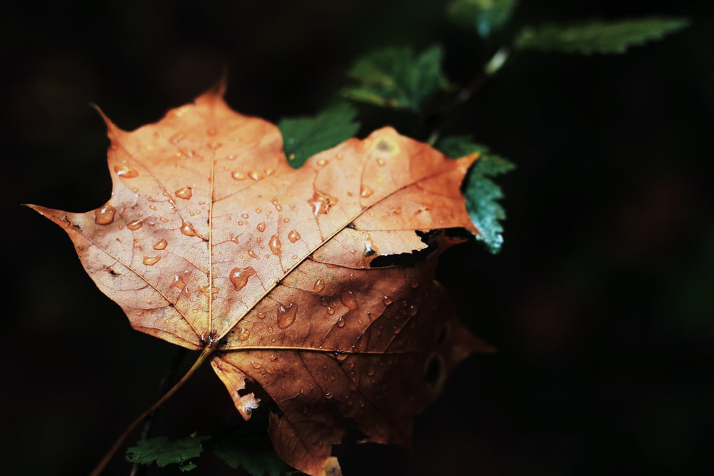 shallow focus photography of dried leaf