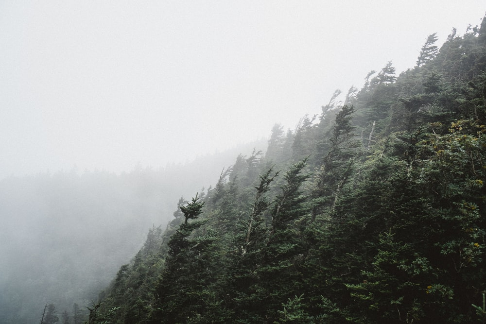 green trees under gray sky during daytime