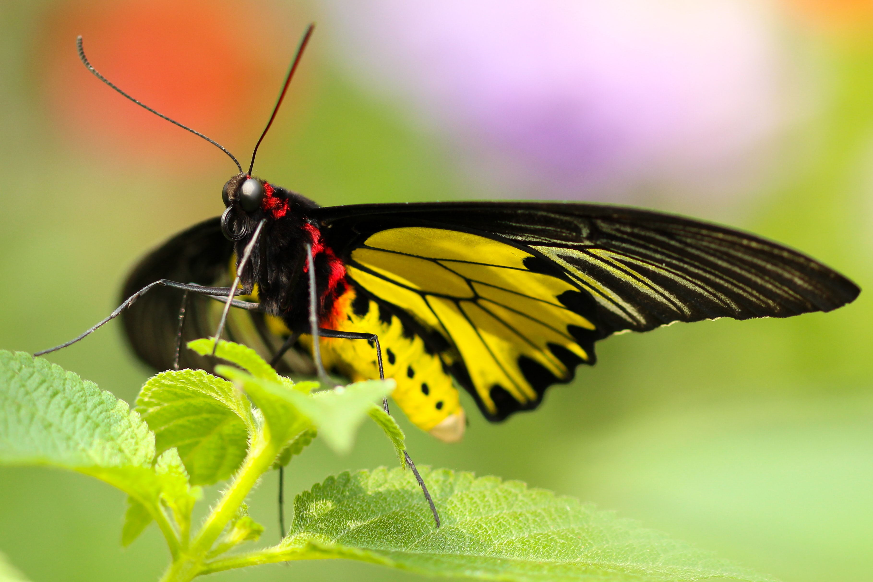 black and yellow butterfly on green leafed plant