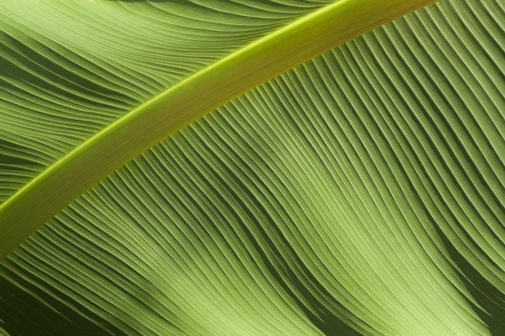 macro photography of green banana leaf