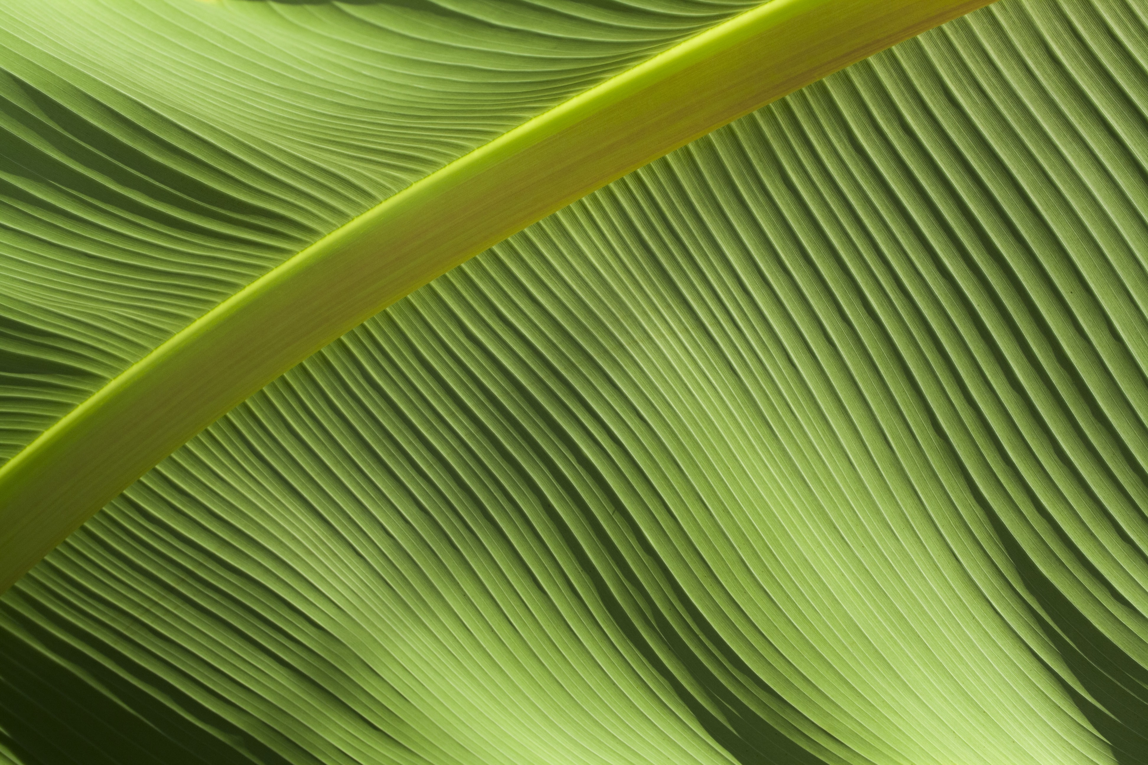 macro photography of green banana leaf
