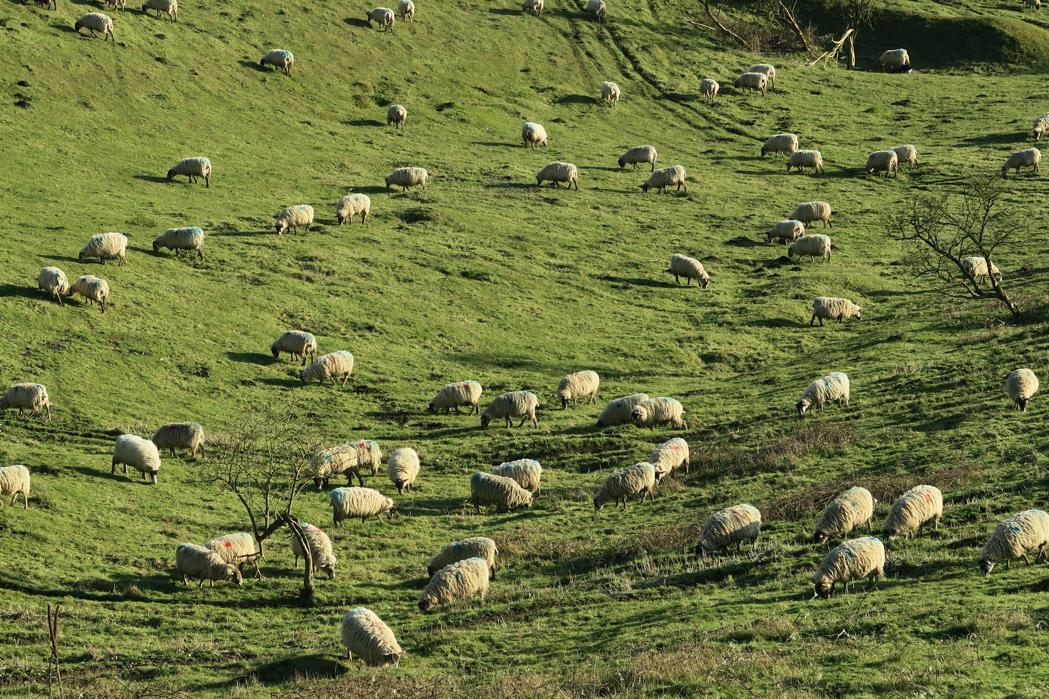 sheeps scattered on green grass field