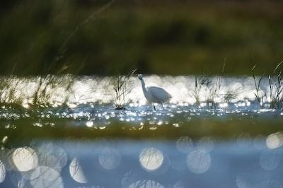 white bird on lake delaware zoom background