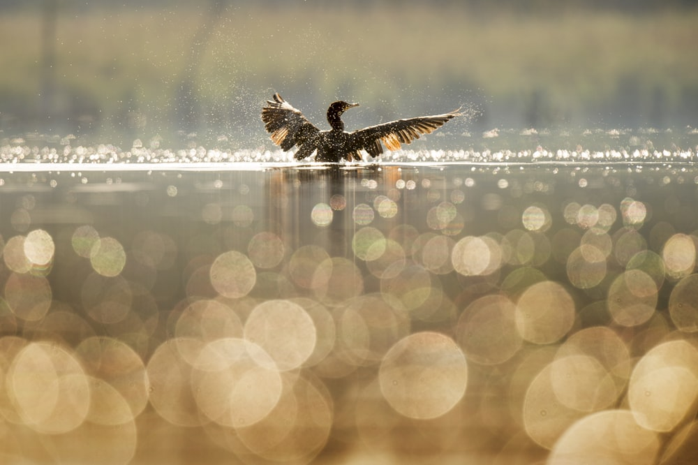 bird bathing on body of water
