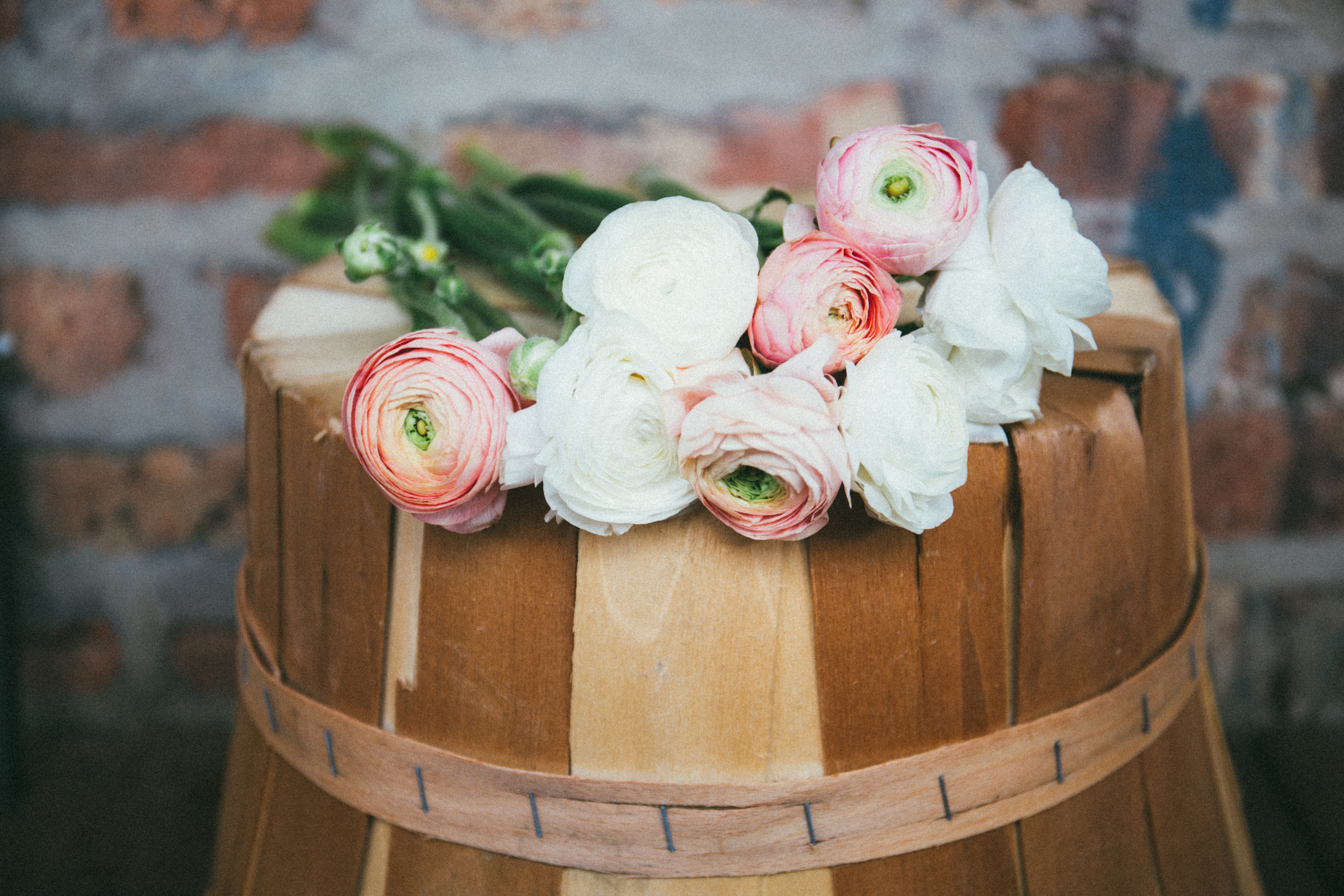 Several white and pink rose-like flowers on top of an overturned bucket