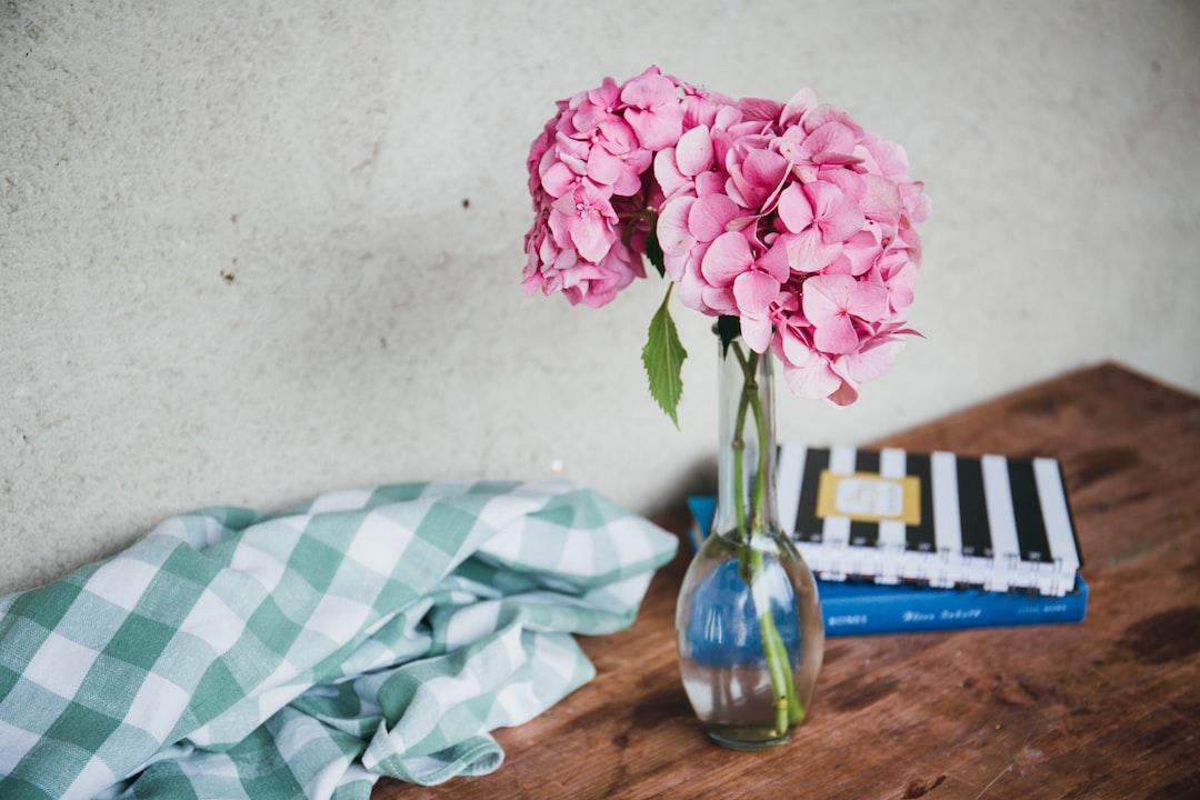 Pink hydrangea in a vase