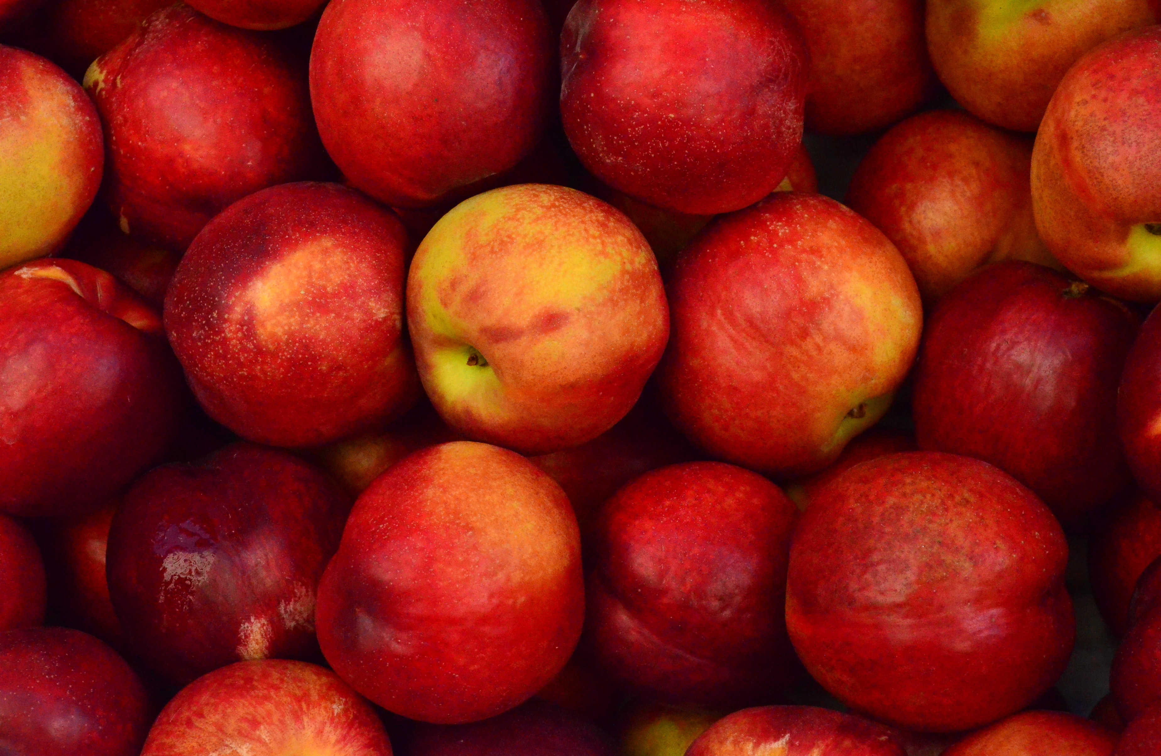 A collection of red juicy and fresh apples