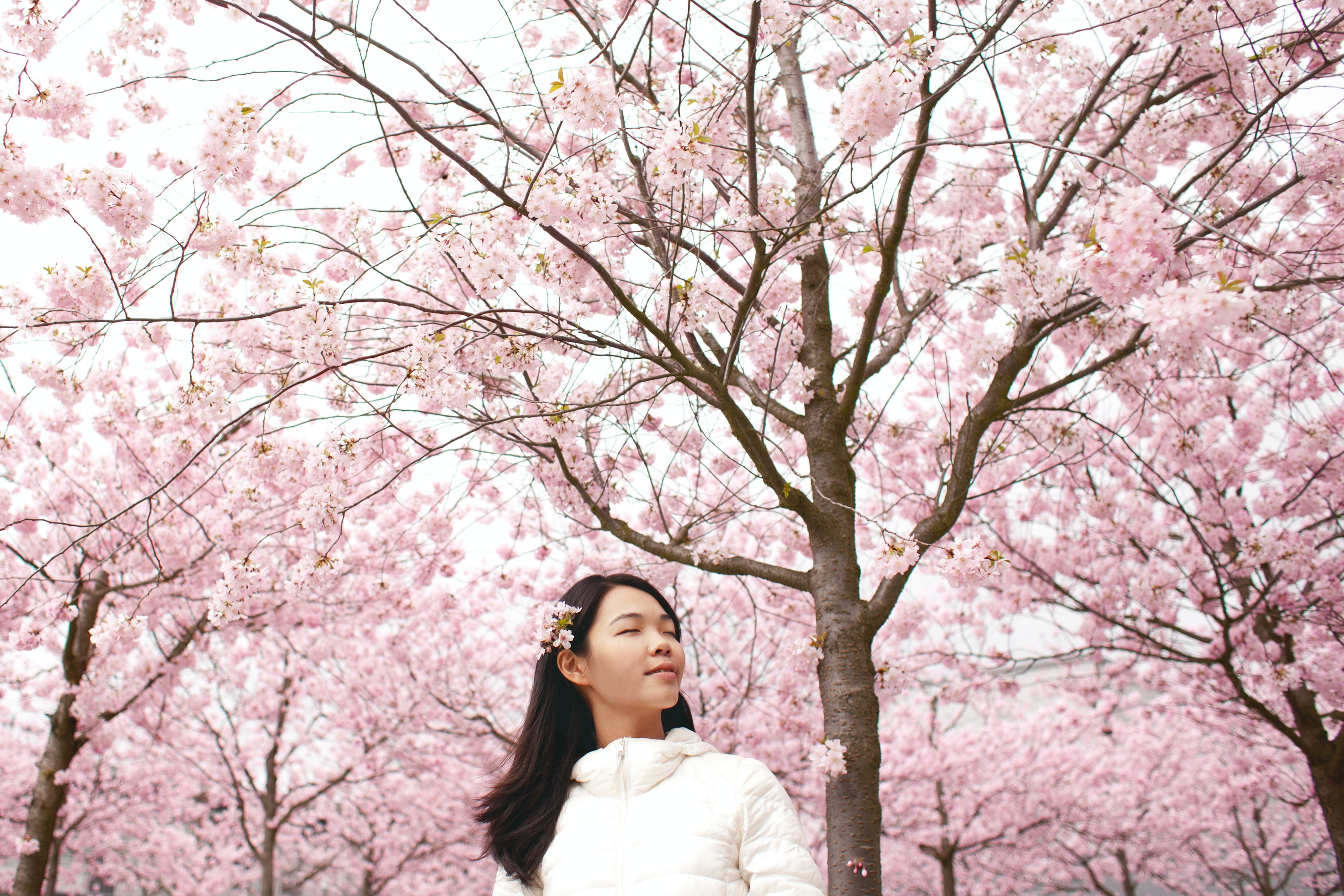 Woman with closed eyes and flowers in her hair stands among cherry blossom trees in Cottbus