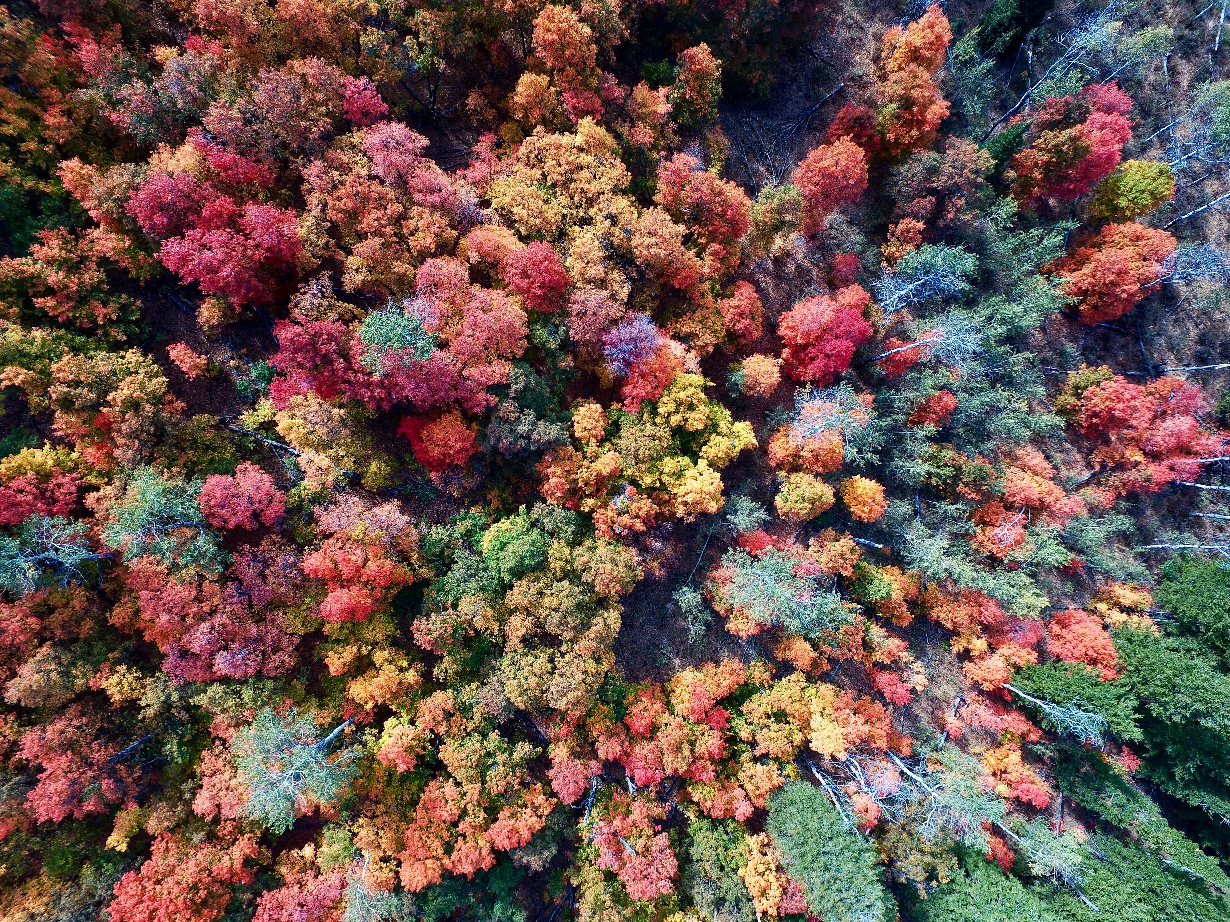 Drone shot of a forest in autumn colors