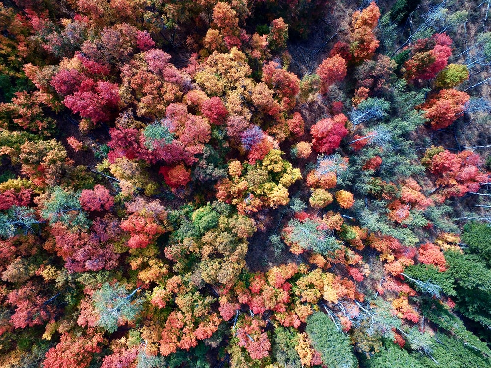 aerial photography of nature trees