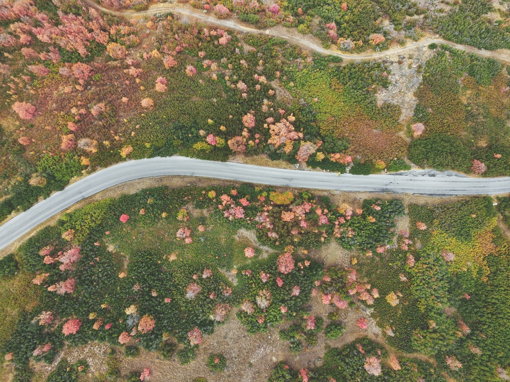 aerial photography of road between forest
