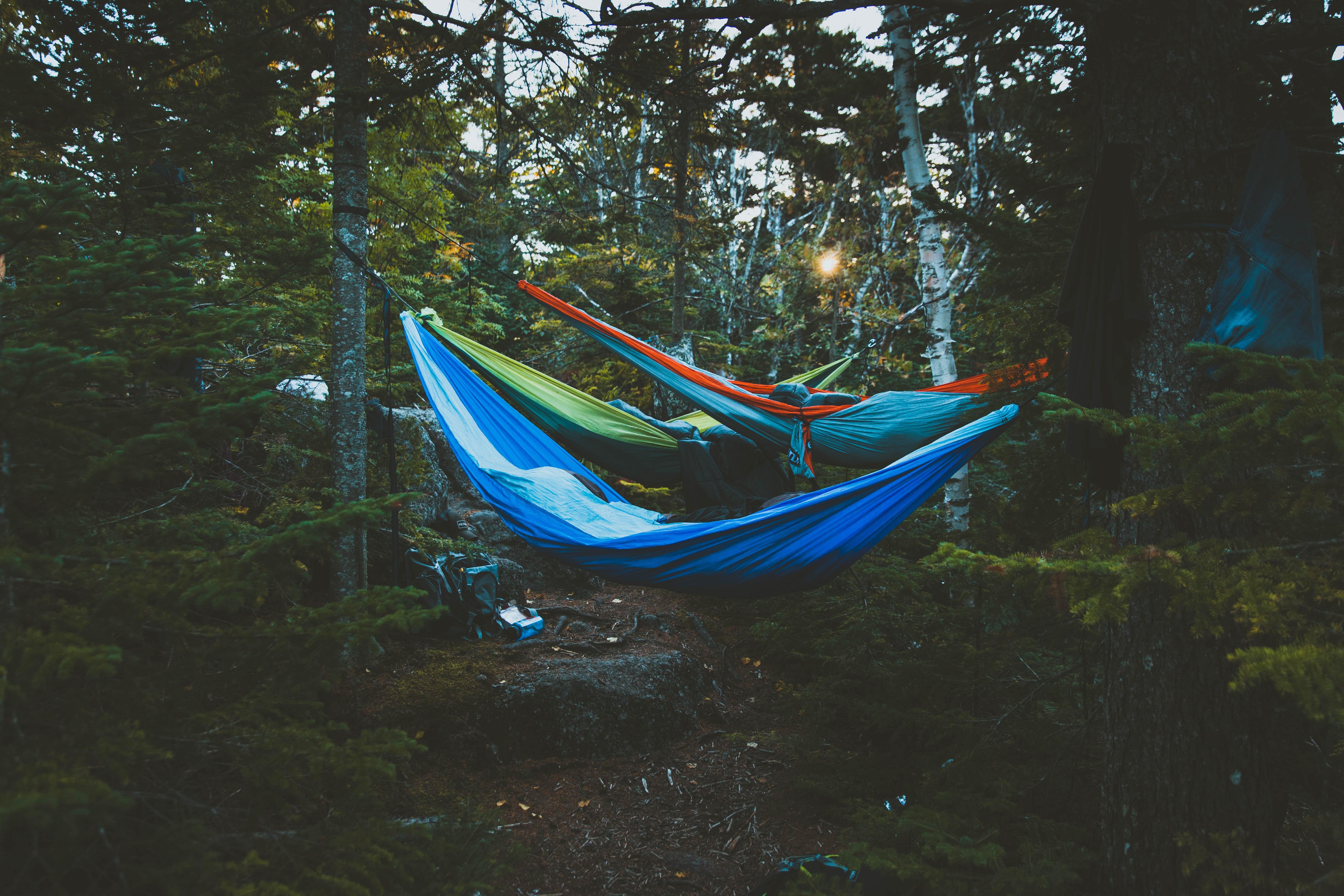 Campers sleeping in hammocks in the woods