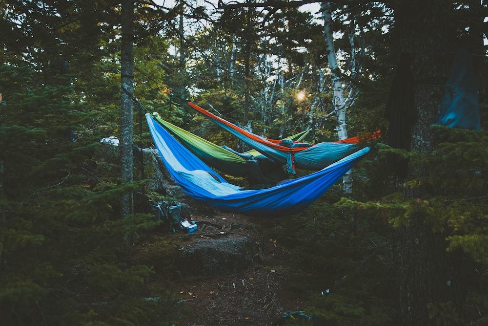 people in hammocks tied between trees