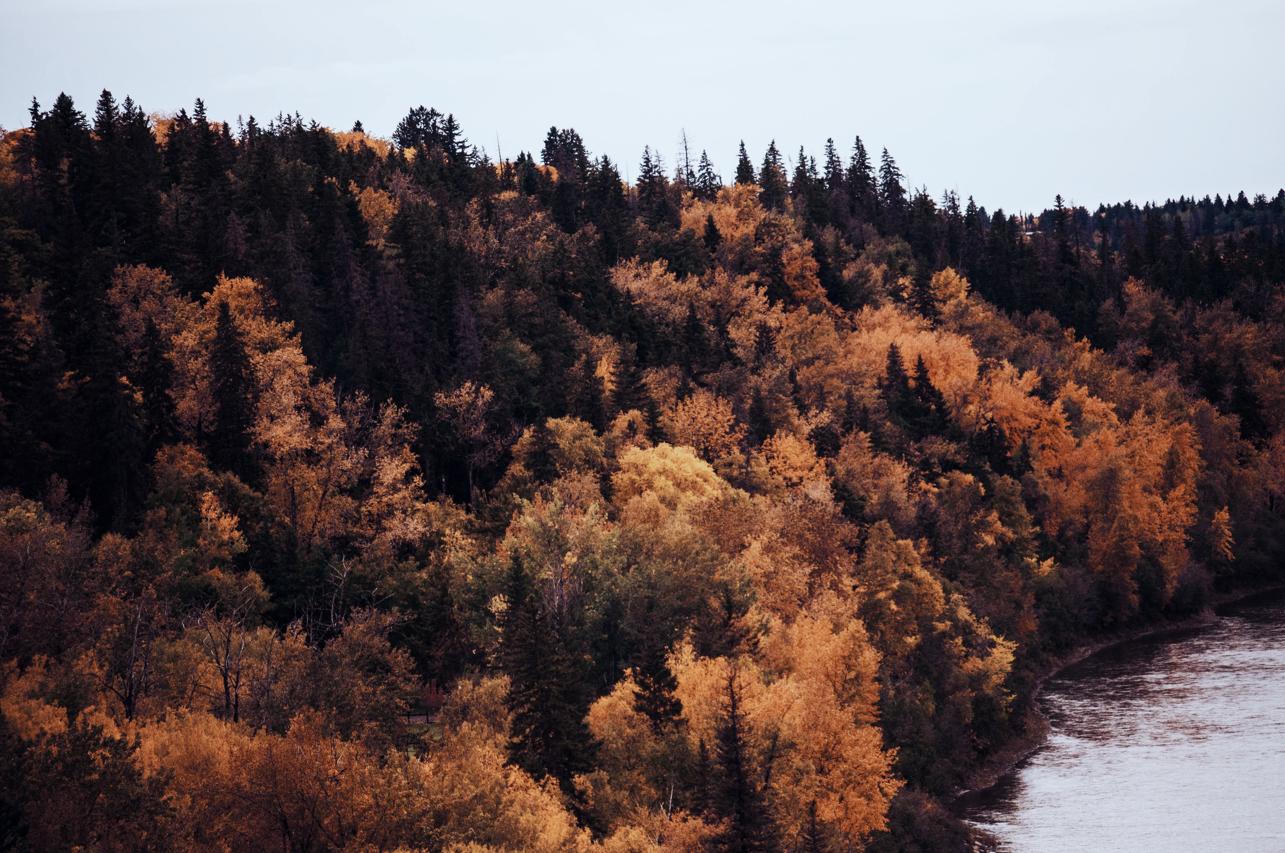 Orange-leaved trees on the bank of a river