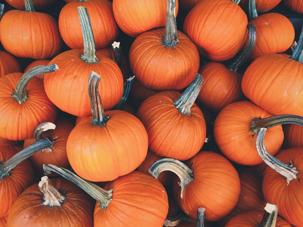 bunch of pumpkins