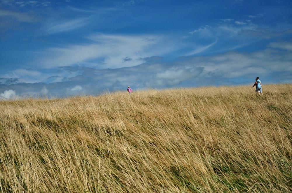 brown grass field under blue sky