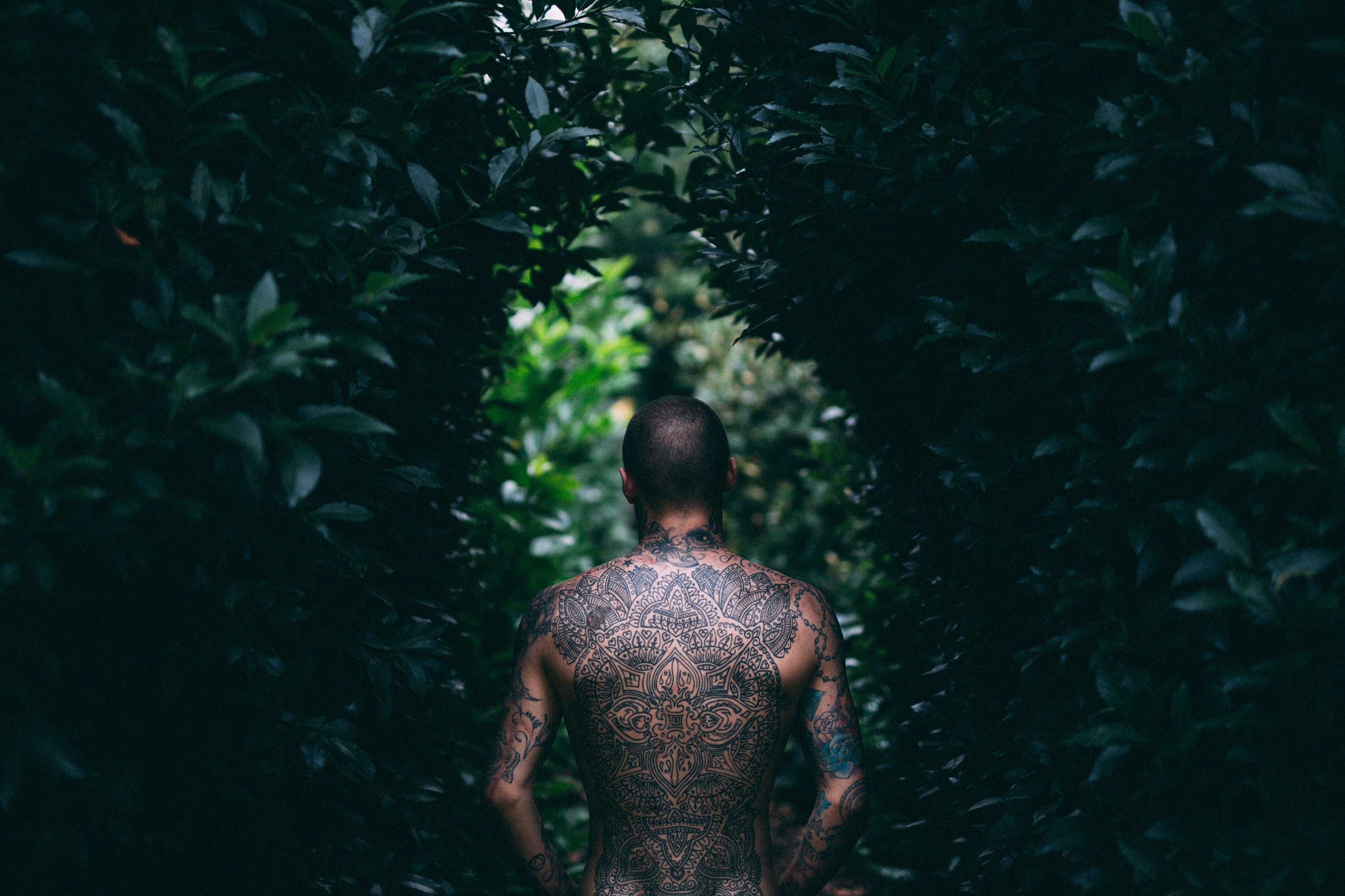 "A man with a fully tattooed back stares down a narrow pathway, encased with trees and bushes, ""Leafy Lane"""