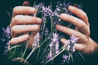 person touching purple petaled flowers