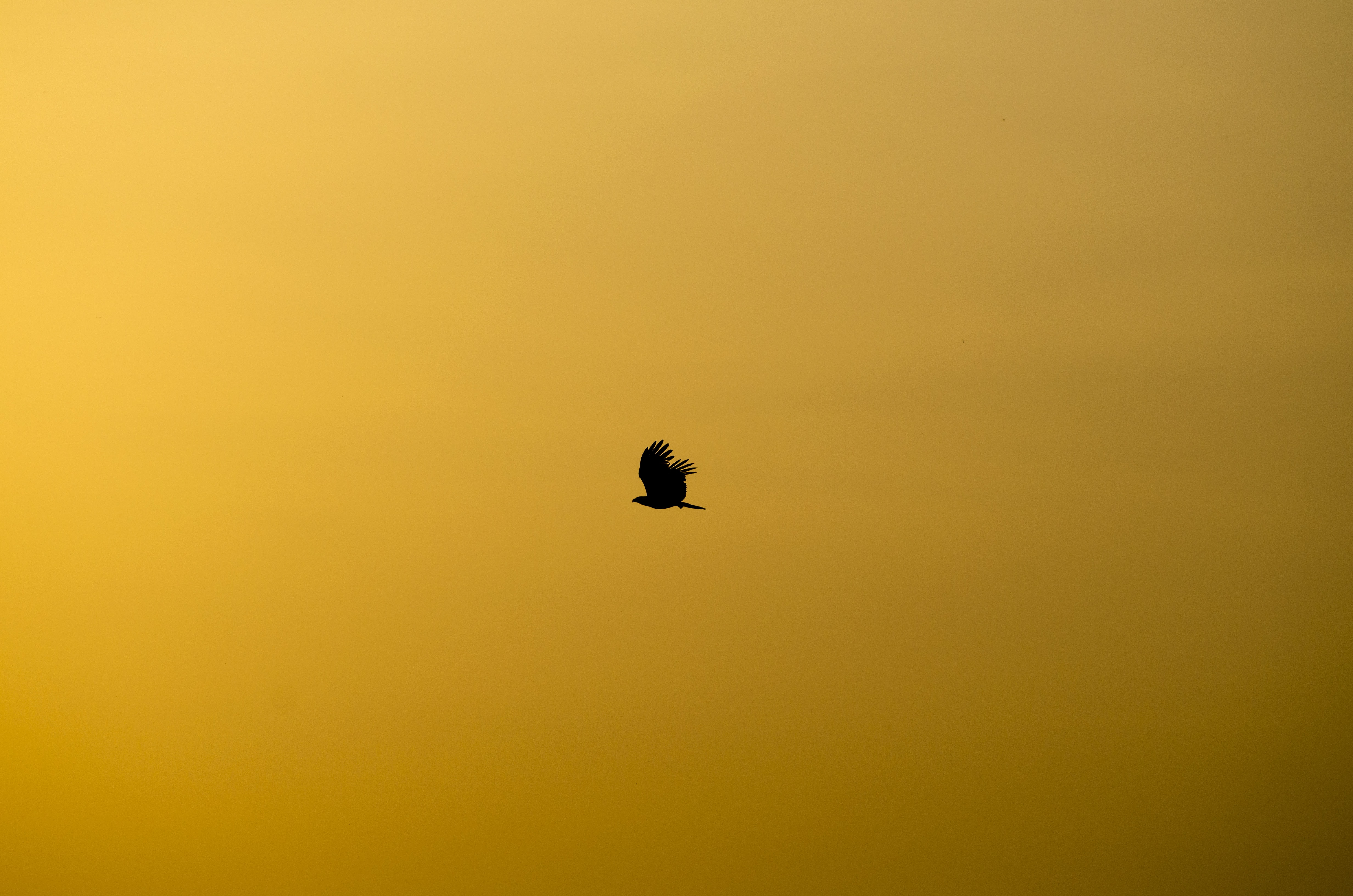 The silhouette of a bird flying through a yellow sky in Bengaluru