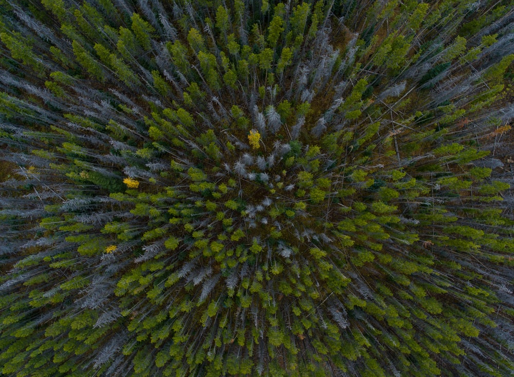 aerial view photography of forest trees during daytime