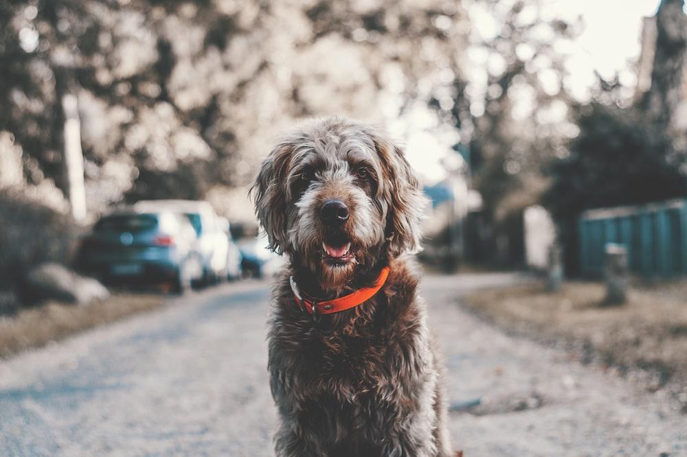 long-coated black dog sitting on road during daytime