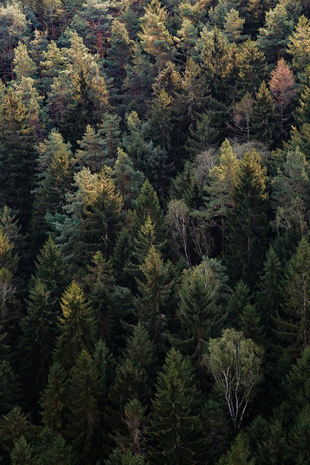 Mixed forest from above